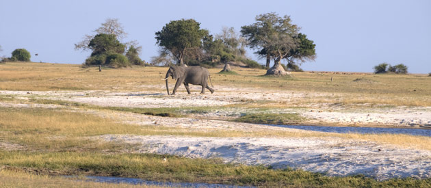 Take the Family on a Botswana Safari