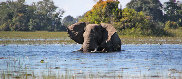 10 Reasons to Visit Chobe National Park